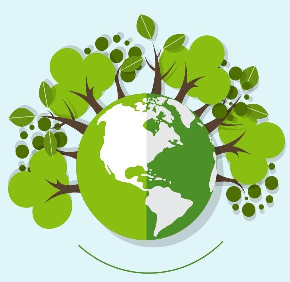 Nachhaltige Pilzentfernung